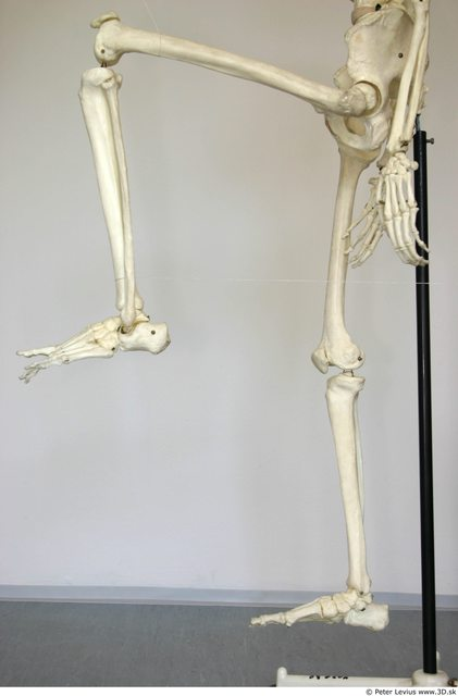 Leg Skeleton Animation references