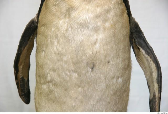Belly Penguin