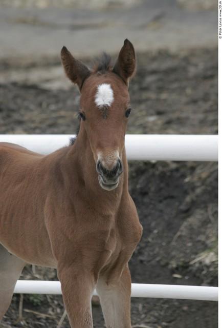 Head Foal