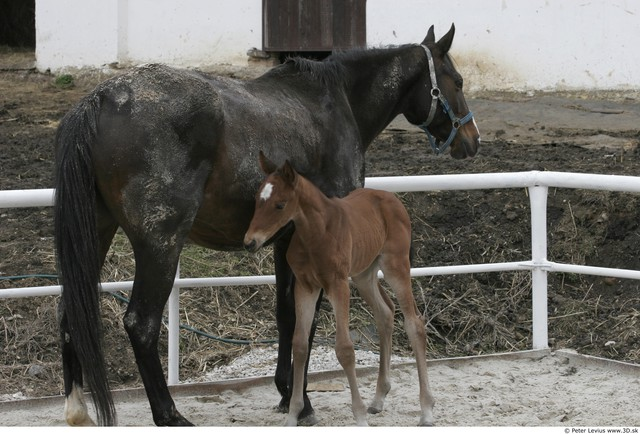 Whole Body Foal