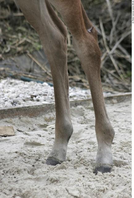 Leg Foal