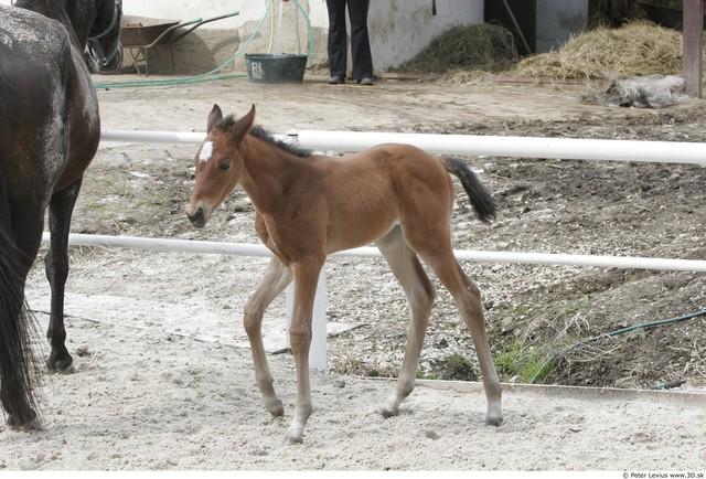 Whole Body Foal