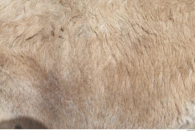 Skin Donkey