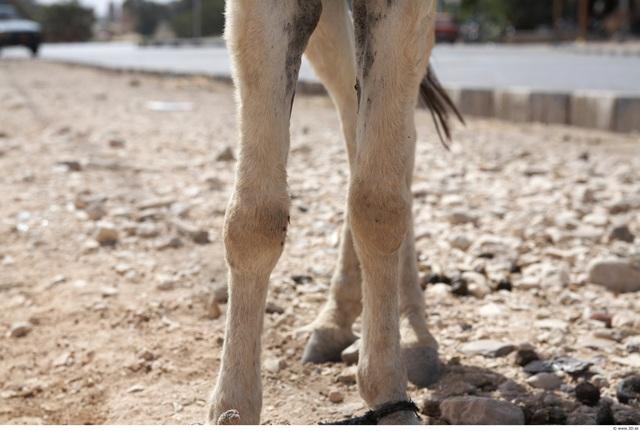 Arm Donkey