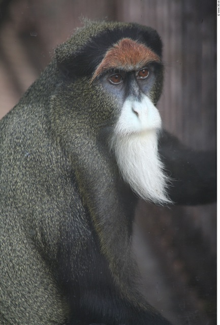 Upper Body Ape