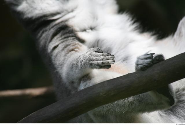 Arm Monkey
