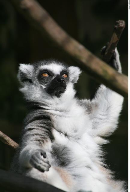 Upper Body Monkey