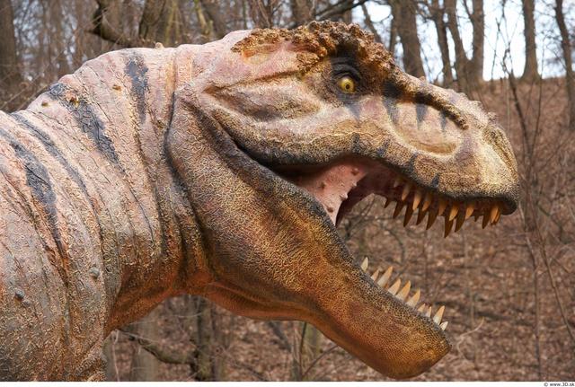 Head Dinosaurus-Thyranosaurus