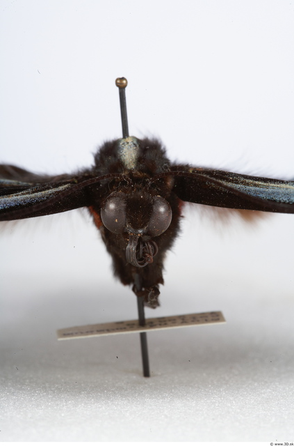 Upper Body Insect