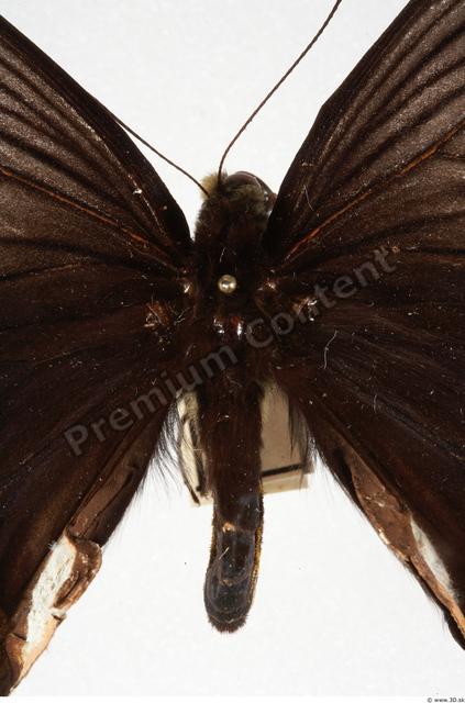 Upper Body Butterfly