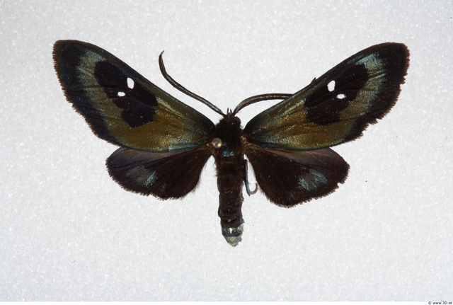 Whole Body Insect