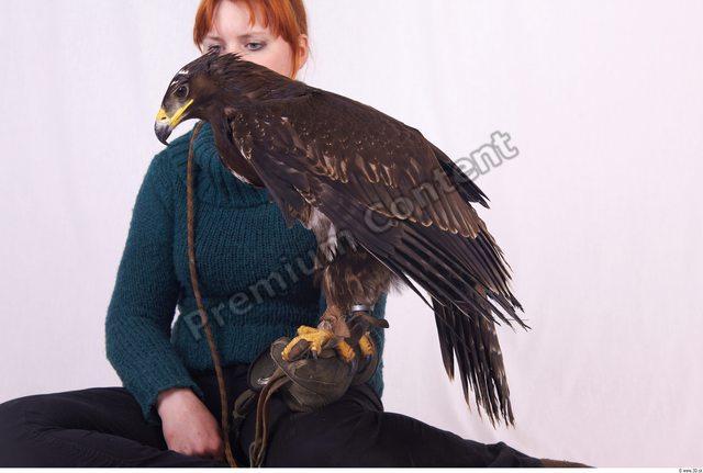 Whole Body Eagle