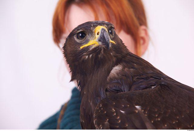 Neck Eagle