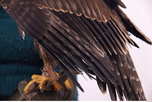 Forearm Eagle