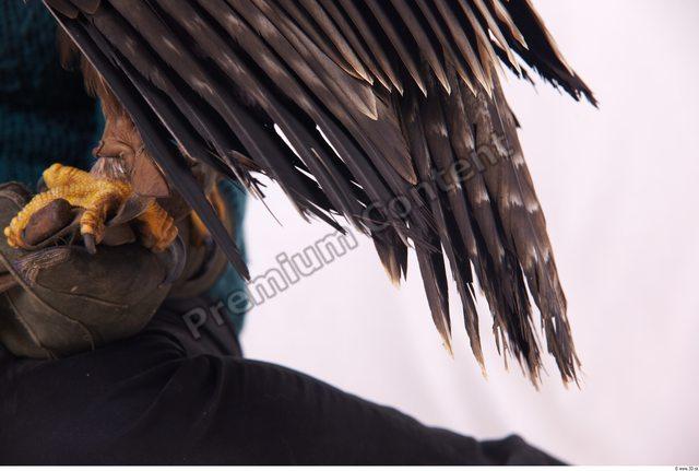 Tail Eagle
