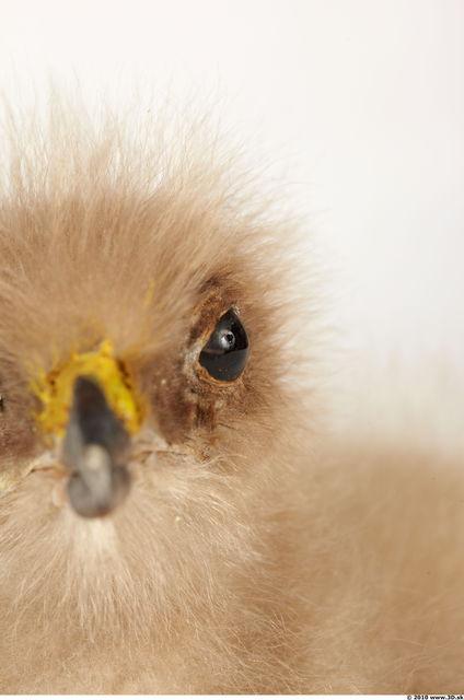Whole Body Head Eagle Animal photo references