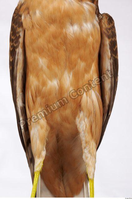 Upper Body Buzzard