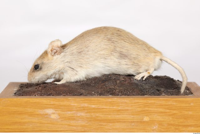 Whole Body Mouse