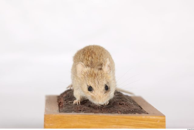 Upper Body Mouse