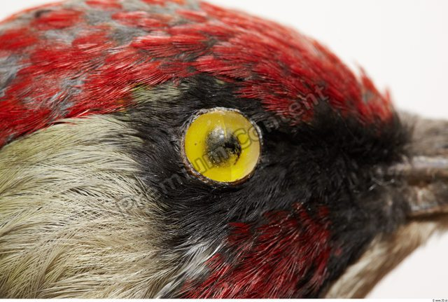 Eye Bird