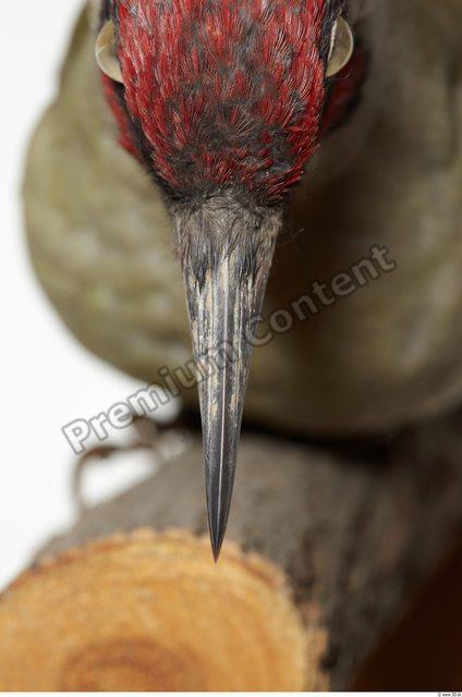 Mouth Bird