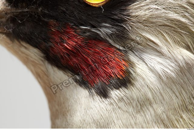 Skin Bird