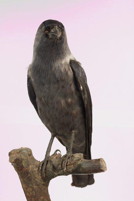 Whole Body Bird
