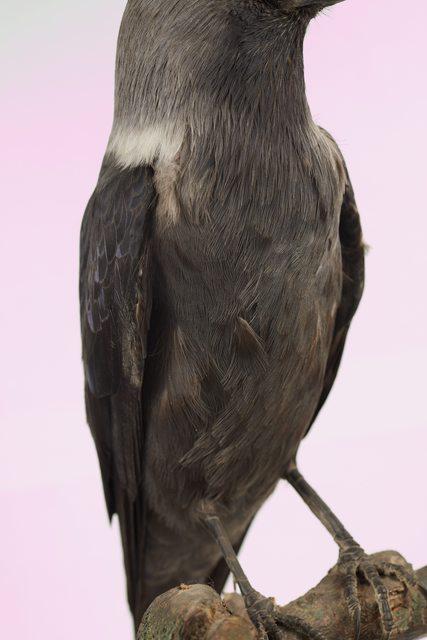 Upper Body Bird