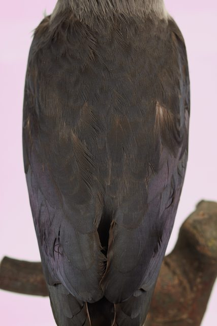 Back Bird