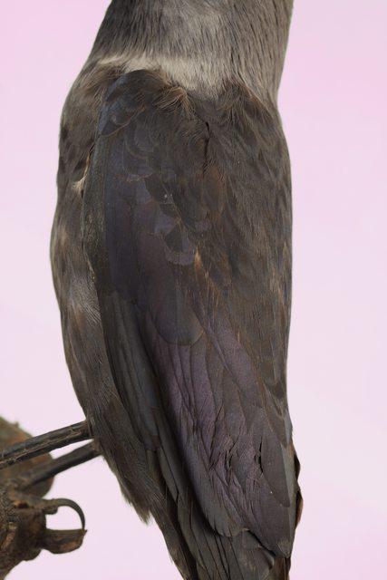 Arm Bird