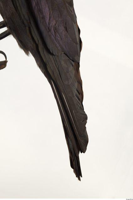 Tail Bird