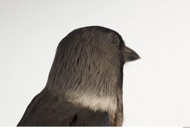 Head Bird