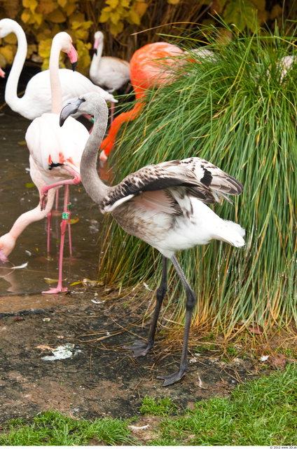 Whole Body Flamingos