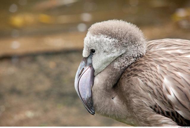 Head Flamingos