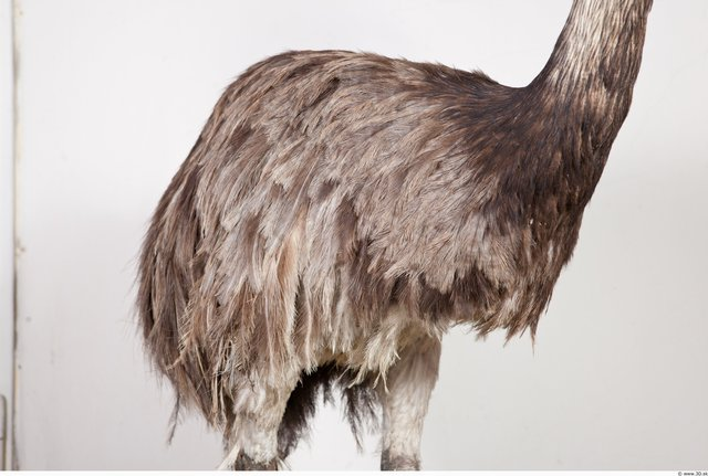 Whole Body Emus