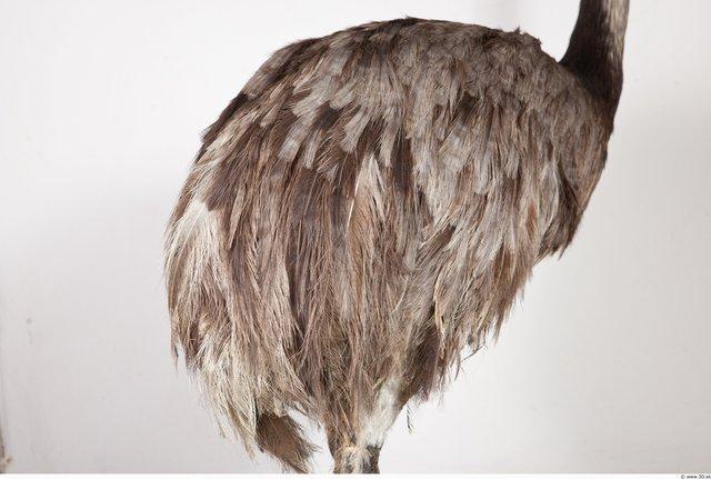 Whole Body Emus