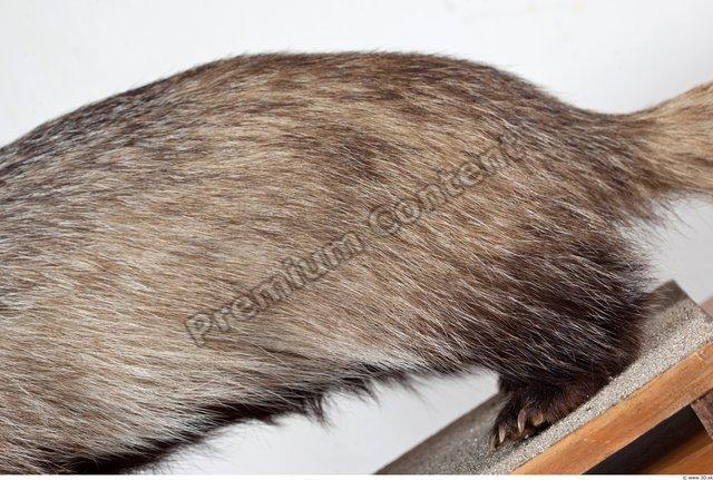 Leg Badger