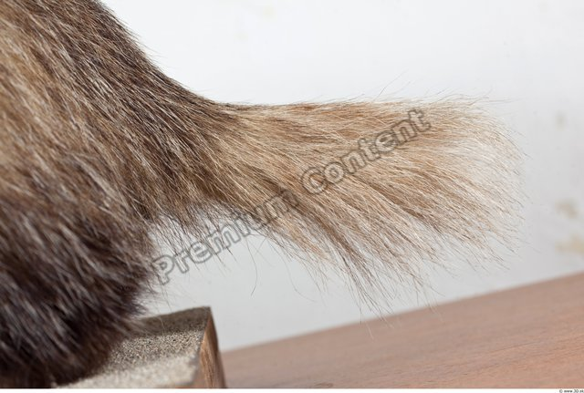 Tail Badger