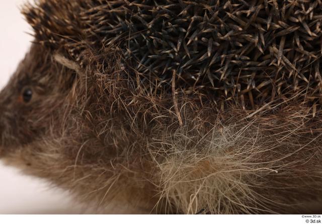 Animal photo references