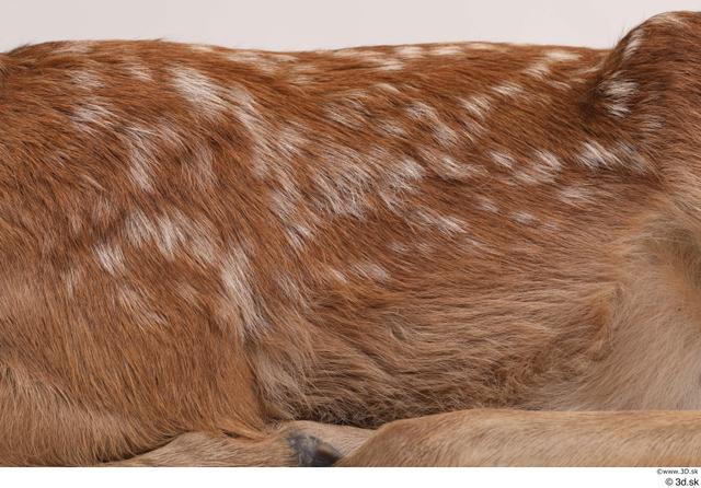 Back Deer Animal photo references