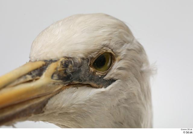 Eye Head Animal photo references