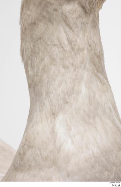 Neck Animal photo references