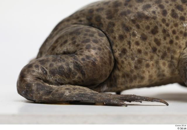 Leg Animal photo references