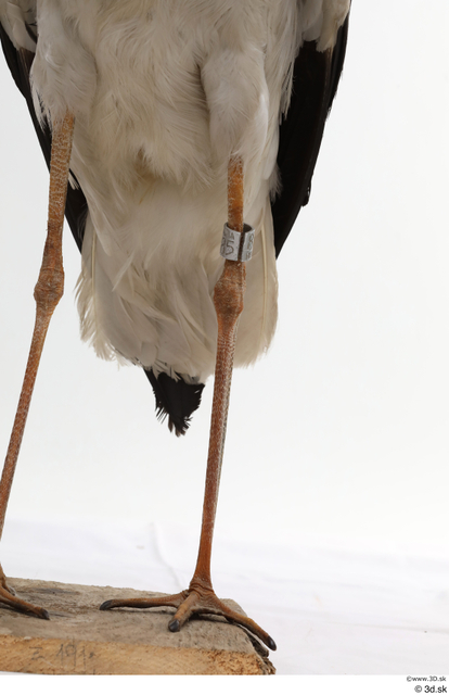 Leg Bird Animal photo references