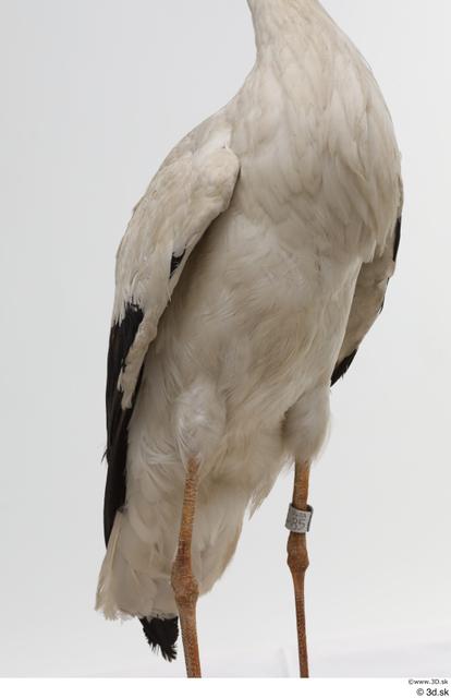 Chest Bird Animal photo references