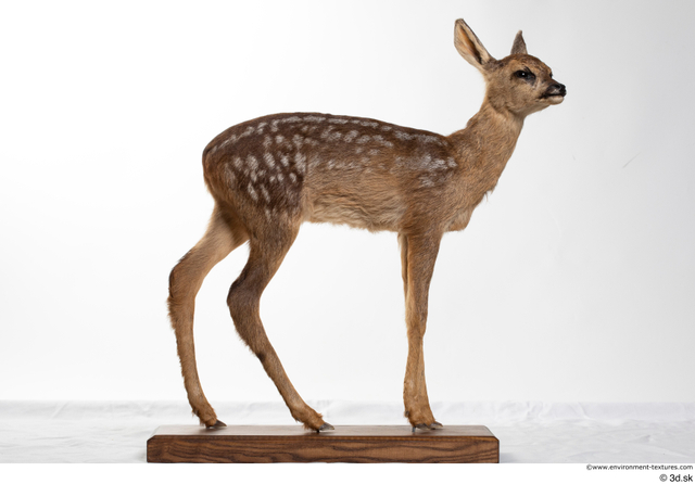 Whole Body Deer Animal photo references