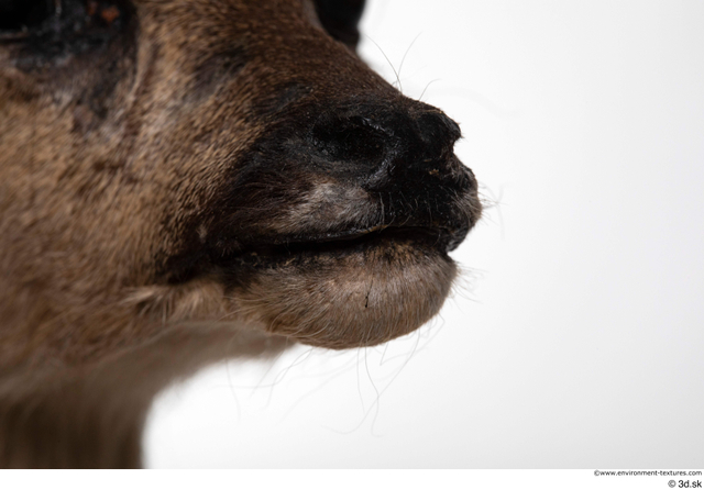 Mouth Nose Deer Animal photo references