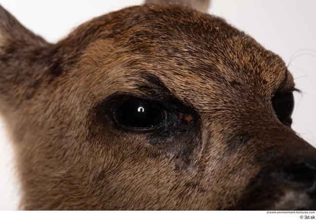 Eye Deer Animal photo references
