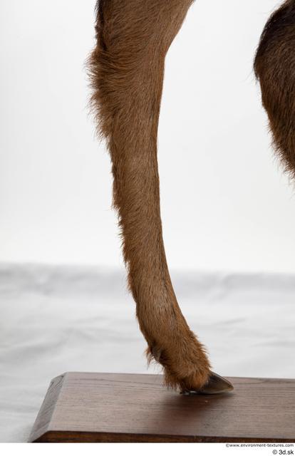 Leg Deer Animal photo references