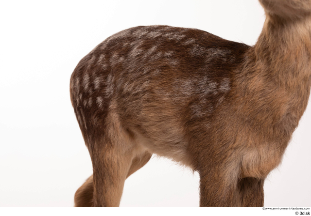 Chest Back Deer Animal photo references